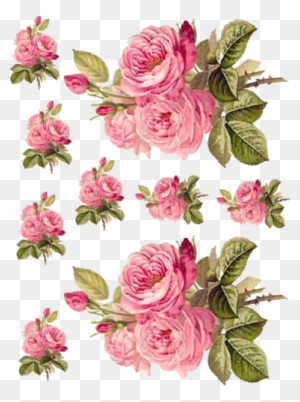 Charming redoute roses shabby waterslide decals furniture rose charming redoute roses shabby waterslide decals furniture rose decoupage paper free transparent png clipart images download mightylinksfo
