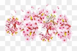 Cherry Blossom Petal Cerasus Bunga Sakura Transparent Free