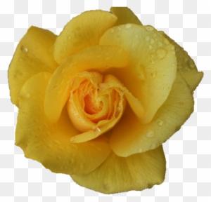180 1809944 yellow flowers tumblr hd wallpaper rose