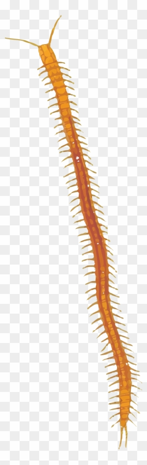 Free Clipart Of A centipede