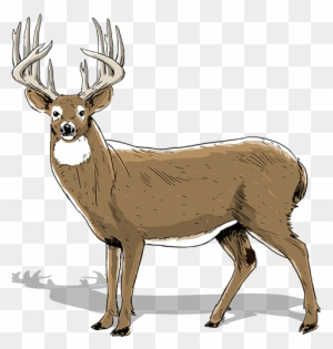 Free Buck Cliparts, Download Free Clip Art, Free Clip Art on Clipart Library