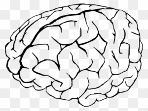 Vector Graphics Of Human Brain In White And Black Public Brain Coloring Page Free Transparent Png Clipart Images Download