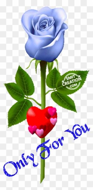 Beautiful Good Morning Images Bundle Of Roses Download Khadi Rose
