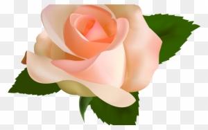 Vector Clip Art Clip Art Rosa Free Transparent Png Clipart