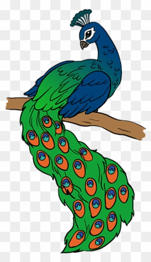 Big Image Peacock Drawing Free Transparent Png Clipart Images