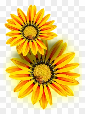 Yellow Flower Clipart Transparent Png Clipart Images Free Download