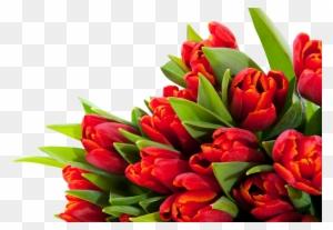 Gz 60 Backgrounds V Alles Gute Zum Geburtstag Blumen Free