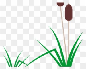 Cattails Plant 01 Wesley S Blog Clipart (#2469381) - PinClipart