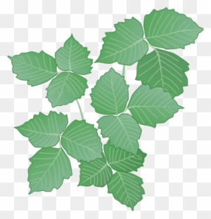 Clipart Ivy Poison Poison Ivy Vine Drawing Free Transparent Png Clipart Images Download,Crib Tents Safe