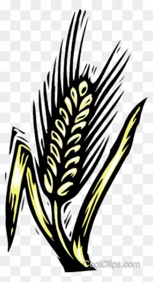 Grain Woodcut Style Royalty Free Vector Clip Art Illustration Getreide Clipart Free Transparent Png Clipart Images Download