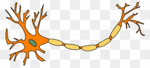 Ap Psych Brain Diagram Unlabeled - Motor Neuron Not ...