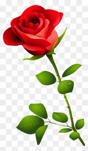 Download Rose Png Image Red Rose Hd Png Free Transparent Png