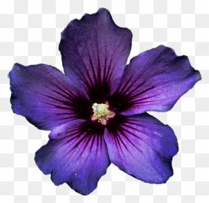 Dark Purple Hibiscus Flower Clipart Clip Art Free Transparent