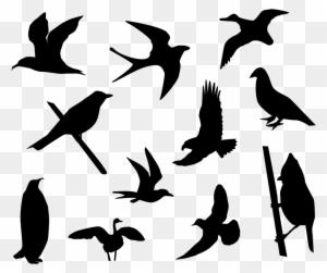 Bird Silhouettes Clipart & Vectors | Bird silhouette art, Bird silhouette,  Silhouette art