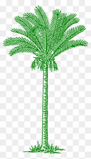 Palmtree Leaves Beach Tropical Png Image Lines Drawing Palm Tree Free Transparent Png Clipart Images Download