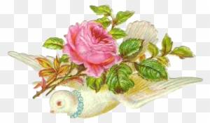 Vintage Flower Clipart Vintage Bird Dove With Pink Rose Free
