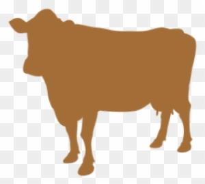 Sourced From Desi Cows Of India - Gir Cow Transparent PNG - 573x457 - Free  Download on NicePNG