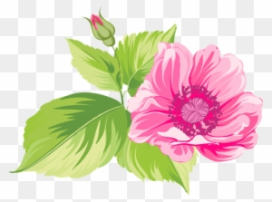 Twist me pretty watercolor pink flower png free transparent png beautiful flowers pretty flower clipart mightylinksfo