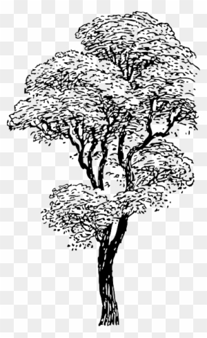 Outline, Drawing, Sketch, Tree, Cartoon, Winter, Trees ...