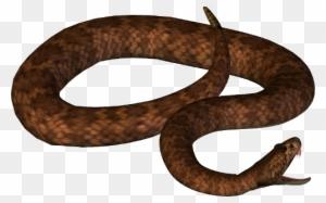 100+ Free Curled & Snake Vectors - Pixabay