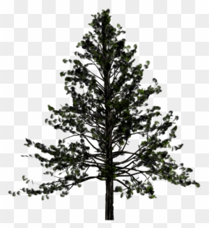 Pine Tree Clip Art Transparent Png Clipart Images Free Download