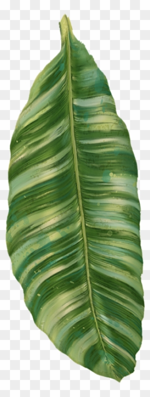 Tropical Leaves Clipart Transparent Png Clipart Images Free Download Clipartmax Find the best free stock images about palm leaves. tropical leaves clipart transparent