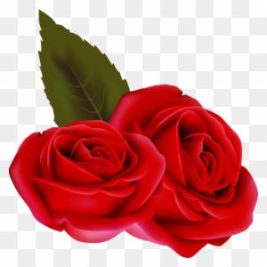 Bouqet De Roses Rosa Fleur Rouge Passion St Valentin Rose Rouge
