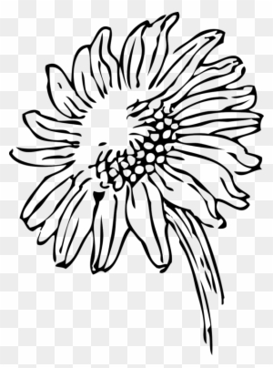 New Sunflower Clipart Black And White Hd Images Sunflowers Clip