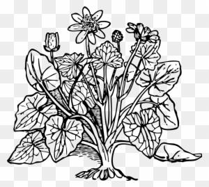 Basil: Planting, Growing and Harvesting Tips — James Bay Beacon